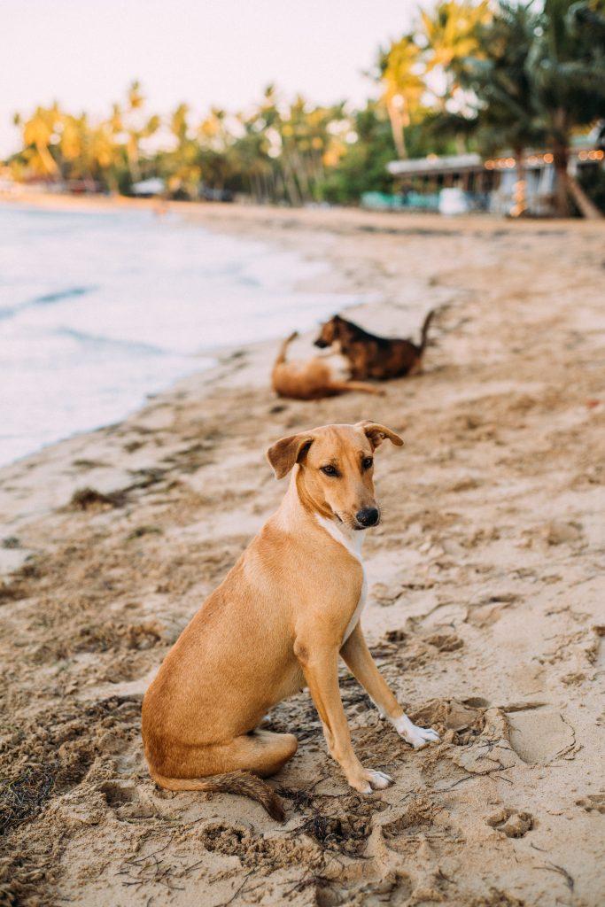 adorable-animal-beach-2252316