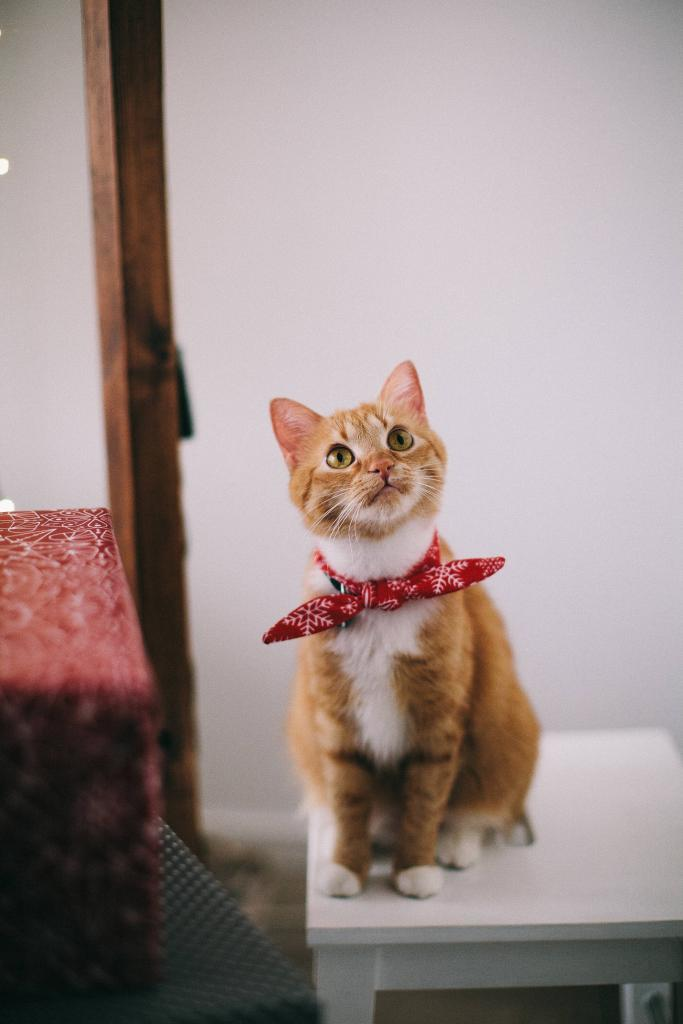 adorable-animal-cat-1741205