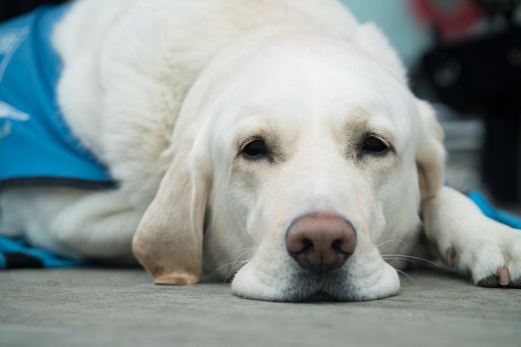 dog-3175814_1280